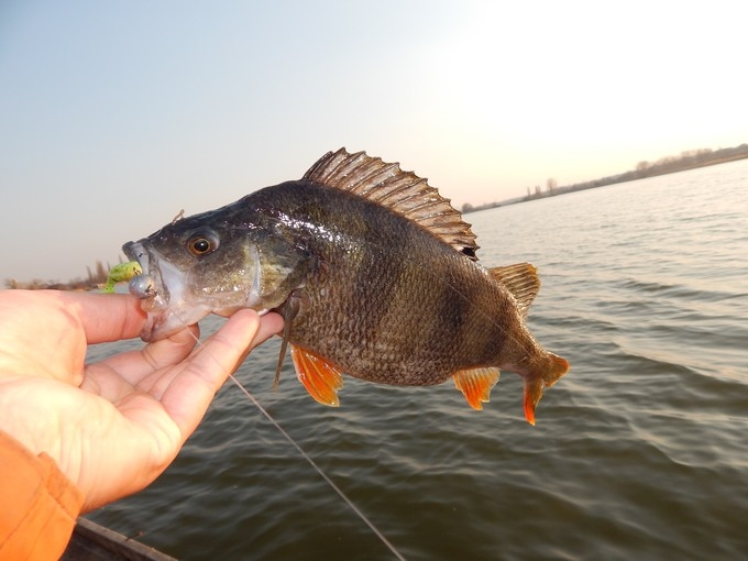 http://fishingstock.ua/upload/iblock/e63/e633c33b3398007a09c972675b8cde26.jpg